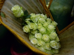 Roses for export to Europe