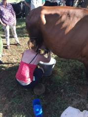 Maeve Milking