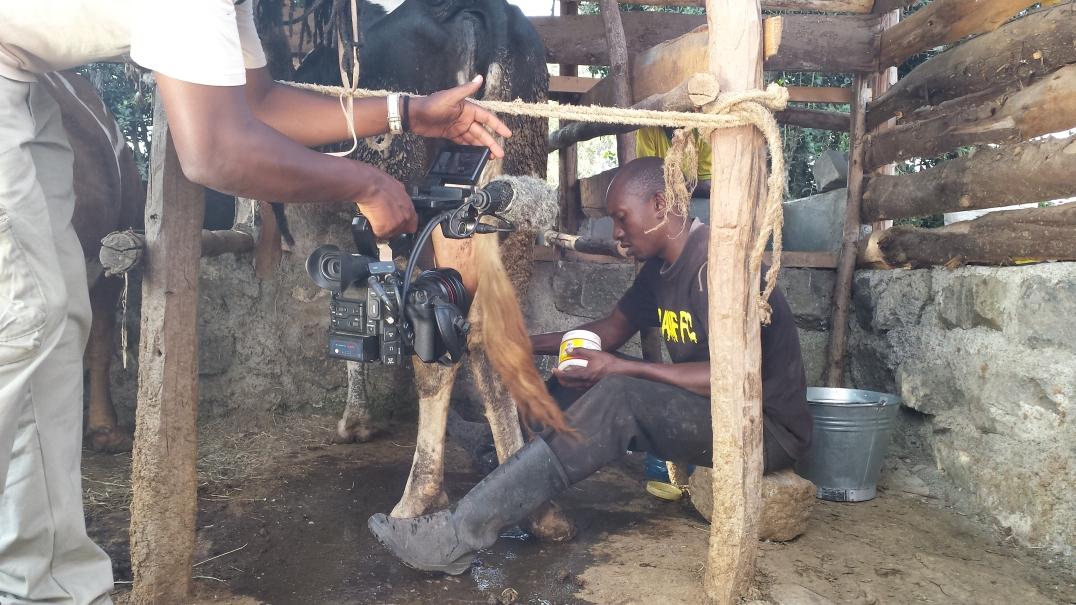 Joseph preparing to hand milk one of his cows