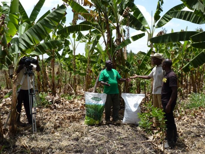 Introducing Joseph to fertiliser for his banana crop, with presenter Tony Njuguna