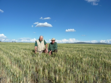 Old friends David Betts and David Stanley in a field of wheat, Kenya