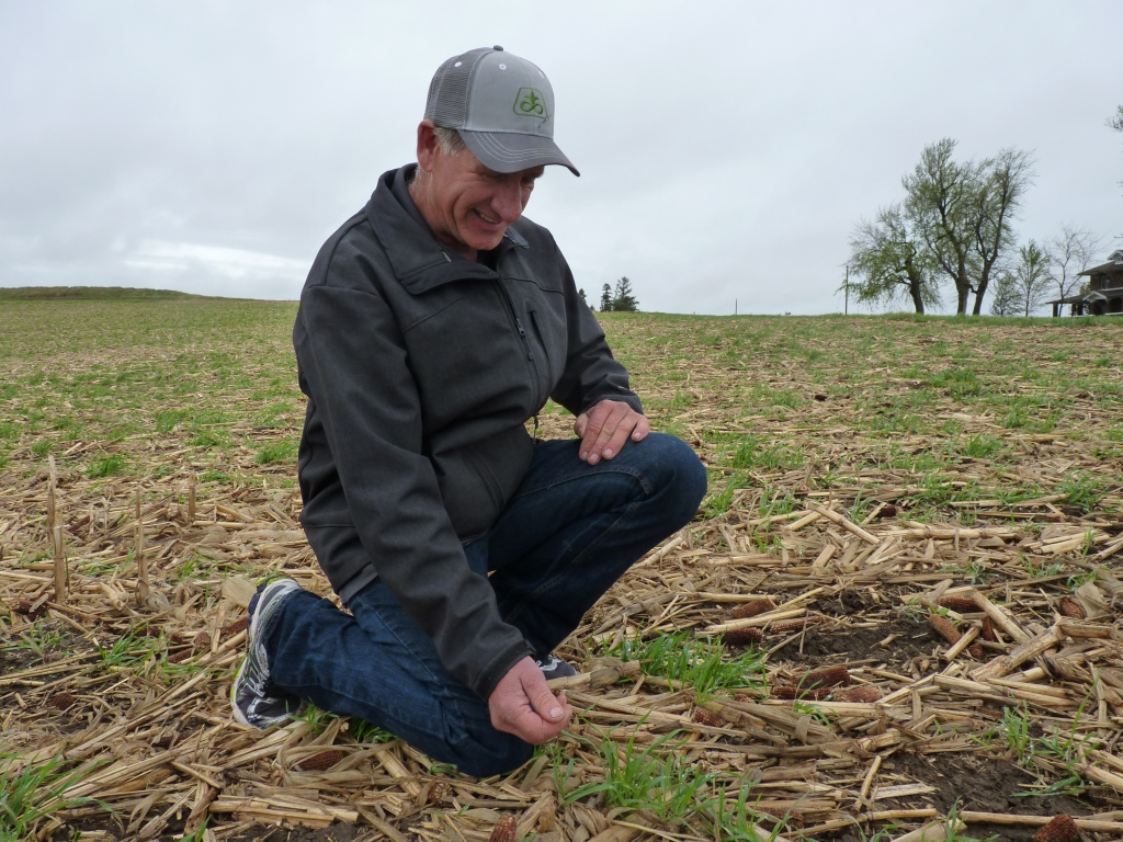 Brent Bierbaum with his cereal rye cover crop