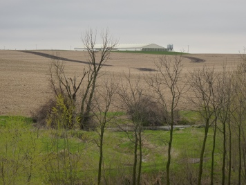 Looking from Garrison's farm towards the Cafo